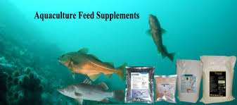 Aquaculture feed supplement | Animal feed suppl...